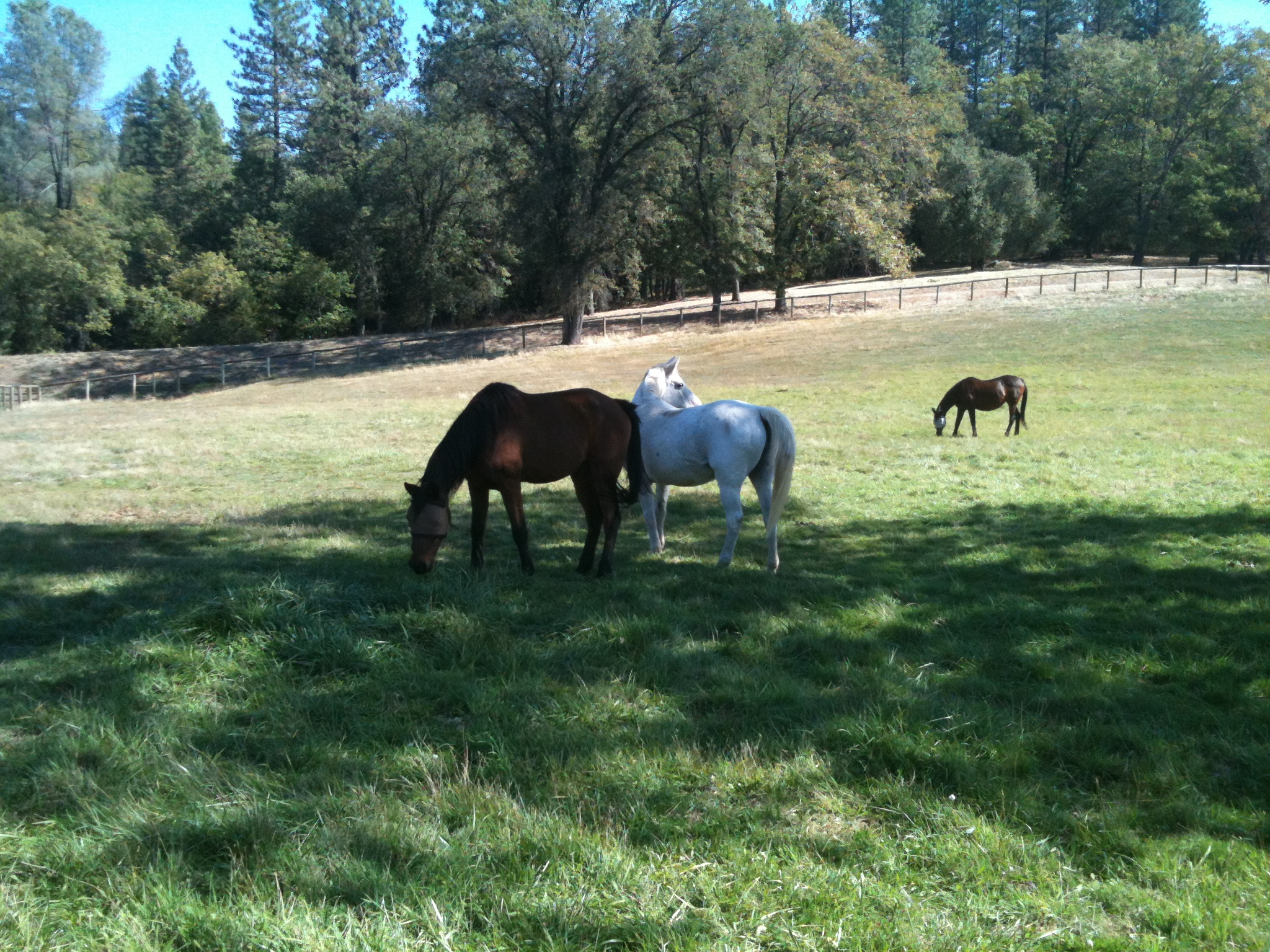 Horse retirement and Lay-up